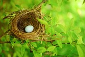 Flying the Nest: How to Harden-off Seedlings