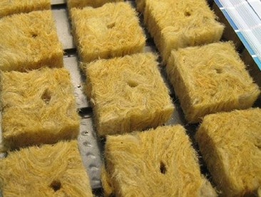 Why are runner roots coming out of my rockwool cubes in my hydroponic garden?