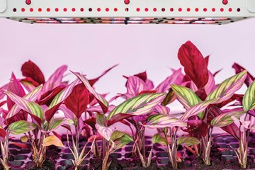 Planning the Best Layout for Your Grow Lights