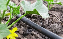 How to Prevent Clogging of Emitters in Drip Irrigation