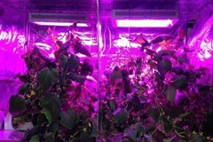 Light Intensity vs. Temperature in a Grow Tent