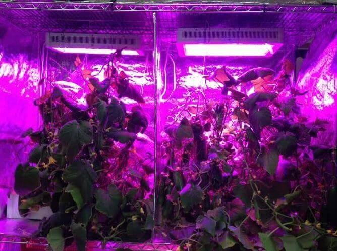 Temperature in a Grow Tent & Intensity vs. Temperature in a Grow Tent