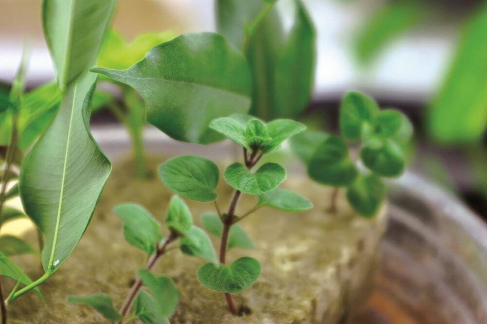 Cloning 101 A Back To Basics Guide To Propagating Plants