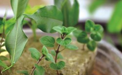 Cloning 101: A Back to Basics Guide to Propagating Plants