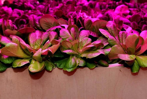 How Vertical Farming Works to Maximize Crop Output