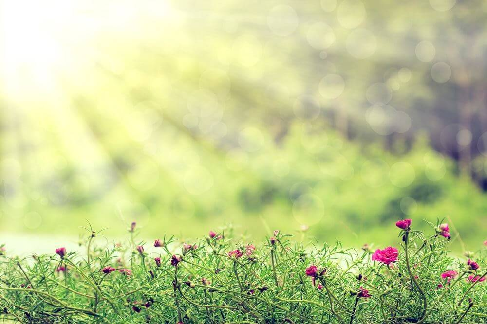 Gardening under artificial light what you need to know - Fight weeds with organic solutions practical tips in the garden ...