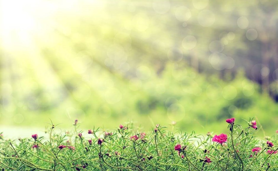 Gardening Under Artificial Light: What You Need to Know