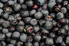 Bring on the Berries: A Beginner's Guide to Growing Berries in Containers