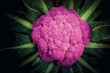 The Beauty of Hydroponic Brassicas
