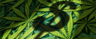 4 Challenges of Scaling Up a Legal Cannabis Business