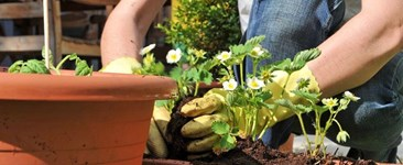 Size Matters: Choosing Pots for Your Container Garden