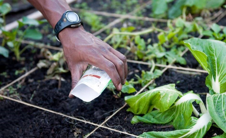 A Guide to Organic Soil Amendments and Fertilizers for Raised Garden Beds
