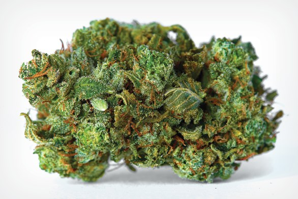 Cut & Dried Strain Review: Purple Haze