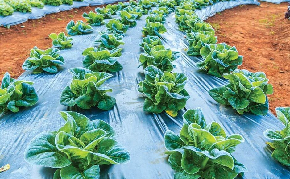 Cool-Climate Plants and Cold-Weather Protection Options for Your Outdoor Garden