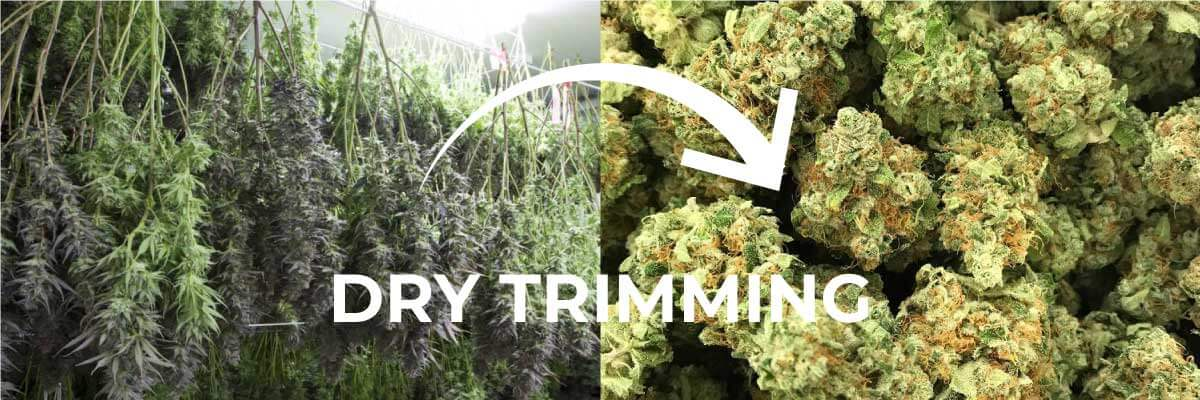 dry trimming