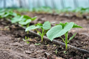 Do You Need to Add More Humus to Your Garden Beds?