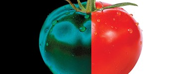 Improving the Flavor of Crops with Photoperiodism