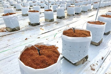 A Quick Guide to Growing Plants in Coco Coir