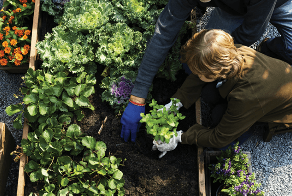 Stronger Together: Cold Weather Companion Planting