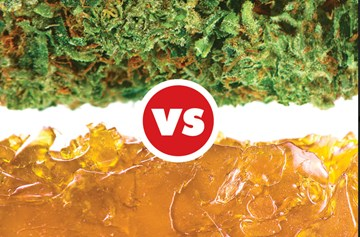Cannabis Flowers or Concentrates: Which is Right for You?