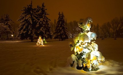 tips tricks for caring for your christmas tree