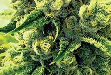 What is Gorilla Glue? - Definition from Maxyield