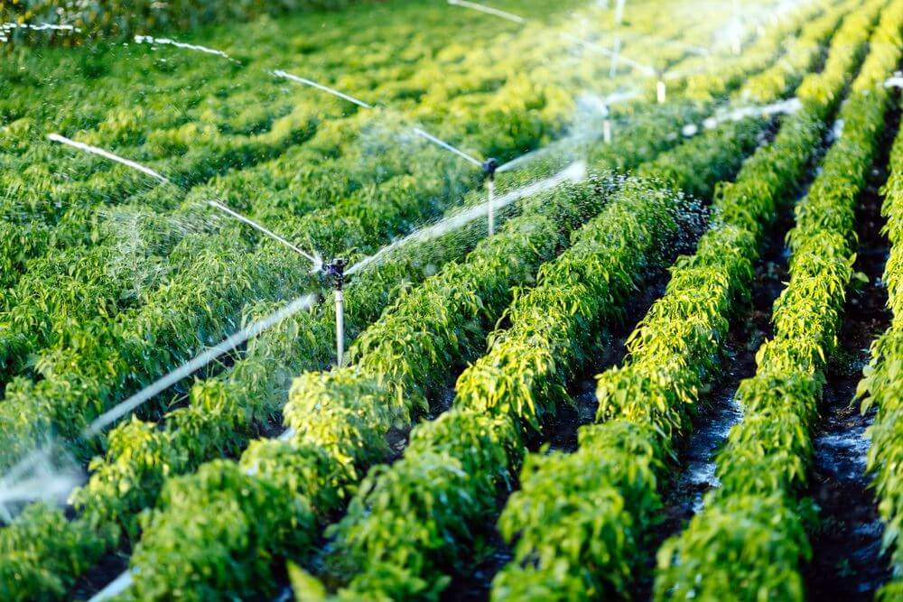 6 Irrigation Mistakes To Avoid When Setting Up Your First