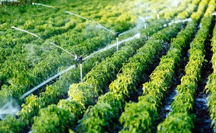6 Irrigation Mistakes to Avoid When Setting Up Your First Irrigation