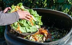 Kitchen Composting and Compost Teas