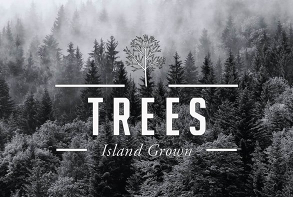 Dispensary Profile: Trees