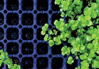 Want To Go From Hydroponics To Soil? Here's a Quick Guide