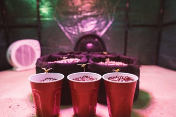 Should I Start My First Cannabis Grow from Seeds or Clones?