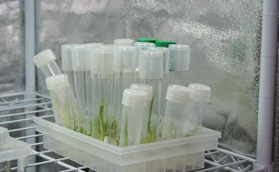 Tissue Culture: Test Tube Babies