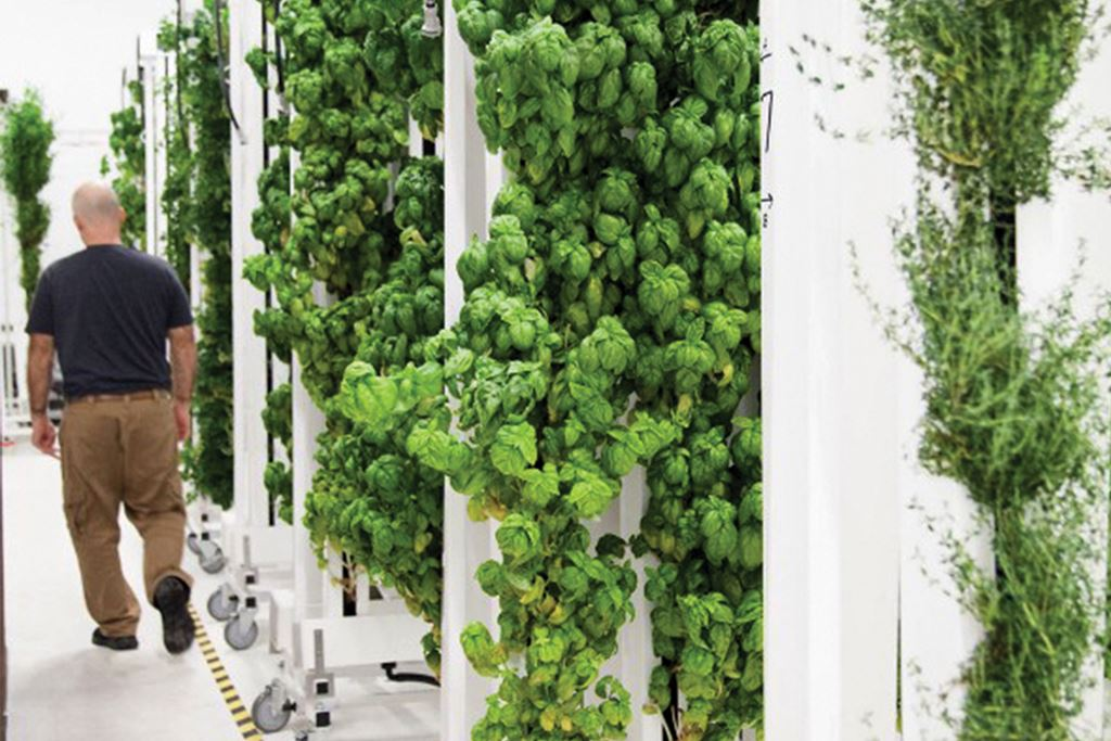 The 4 Factors of Vertical Farm Success