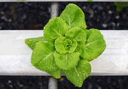 Hydroponics: Top Feeds to Follow on Twitter