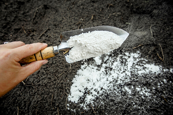 Gardener mixing dolomitic limestone powder in garden soil to change the pH ant to provide more nutrients for plants