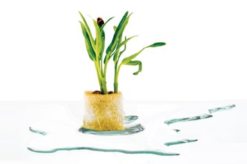 Water Plants: How Much Water is Too Much?