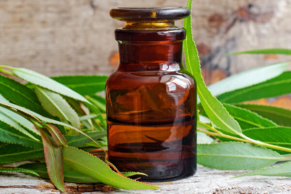 Willow extract is a popular, natural root stimulator