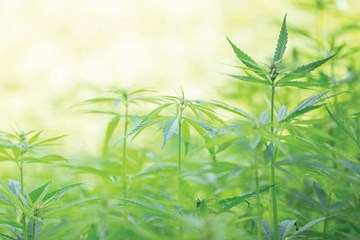Growing Weed: Creating the Environment Your Cannabis Plants Crave