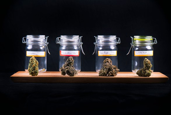 10 Cannabis Strains For Happiness and Euphoria
