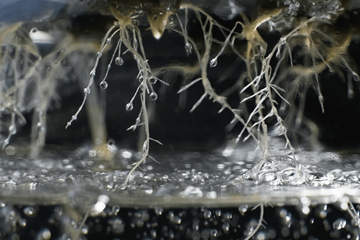 Defend Your Roots: Dissolved Oxygen