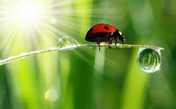 Trellises, Super-cropping & Ladybugs: Increase Your Yields by All Means Necessary
