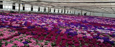 Why Air Circulation Is Essential for Greenhouse Climate Control