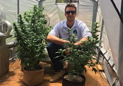 GreenBox Grown Provides Complete Cannabis Growing Starter Kits for the Home Grower