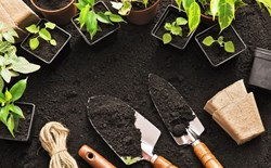 Recipes for Success: Building Your Own Organic Potting Soil