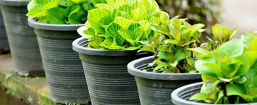 Organic Gardening: More Convenient Than Ever