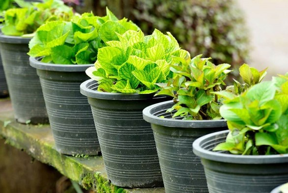 Organic Gardening: Now More Convenient Than Ever