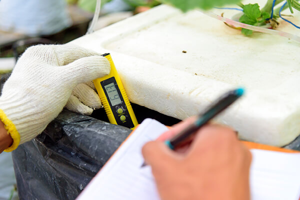 Checking pH value of water bin of hydroponics system