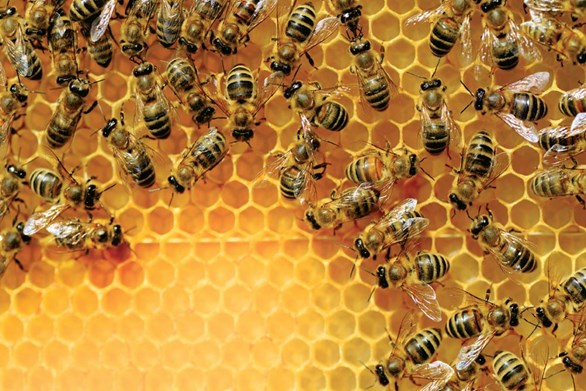 5 Reasons to Start Your Own Bee Colony