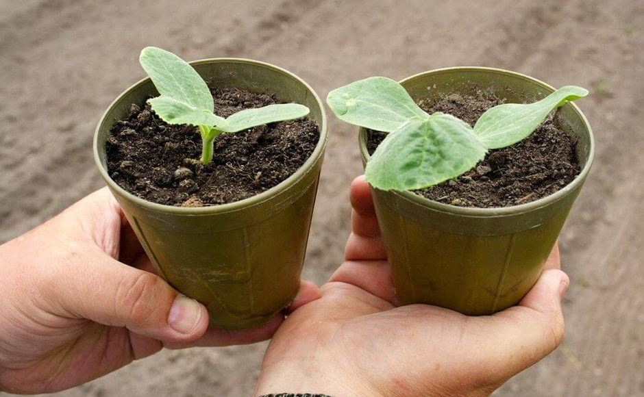 Plants in Pots: 5 Things to Think About When Choosing a Container